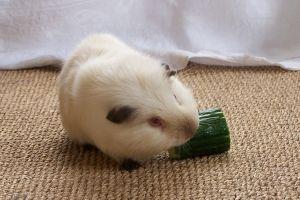 свинка пеппа последние серии смотреть онлайн